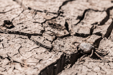 Crack ground of drought animal dead close up.