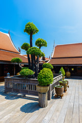 bonsai tree on wooden floor in thai house style