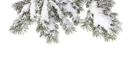 fir tree branches covered with fluffy white snow