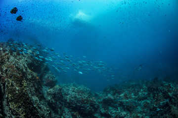 Ocean underwater world with fish school and boat at water surface