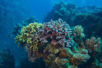Underwater coral world aquatic background