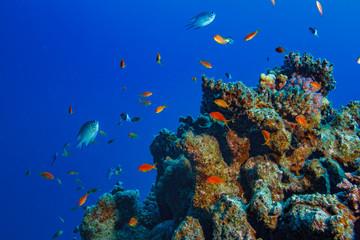 Fish in corals in deep blue sea, scuba diving shot
