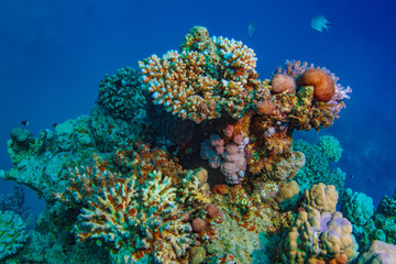 Coral reef in Red sea underwater scene against blue water background