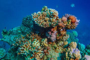 Coral reef in Red sea underwater scene against blue water background