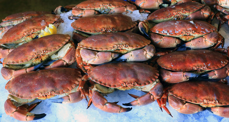 Edible Crabs (Cancer pagurus) in a fishmonger's display, Cornwall, England, UK.
