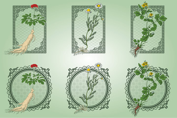 Set of medicina herbs with patterned frames: ginseng, chamomile, celandine. Vector illustration in engraving style, in colors.