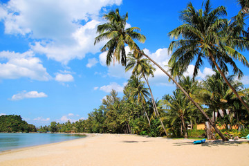 The view on the coconut palm trees on a sandy beach near to sea on a background of a blue sky. Koh Chang, Thailand.