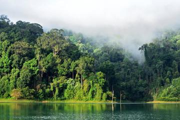 Landscape of dense tropical rainforest at Rajjaprabha Dam or Cheow Lan Dam (Guilin of Thailand), Forest landscape of Thailand