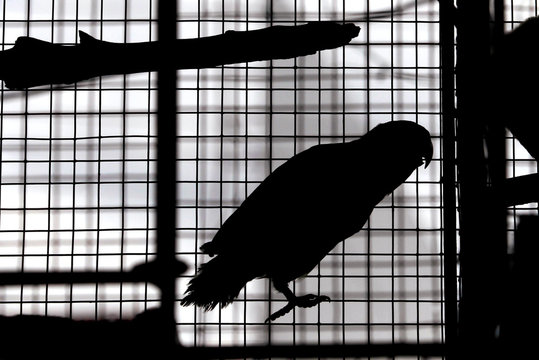 Birds for sale are seen in a cage at a pet shop in Colombo