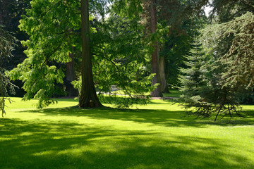 Summer park on sunny day.