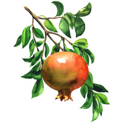 Ripe red pomegranate fruit on a branch with leaves isolated, watercolor illustration on white