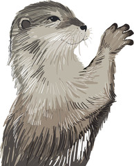 cute otter drawn in vector