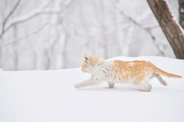 A Cat Running in the Snow