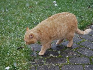 Katze sieht erste Schneeflocken