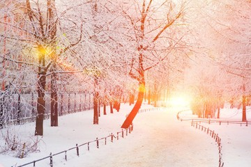 Winter background. Beautiful winter landscape with snow-covered trees in the Park