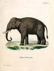 Illustration of an elephant.