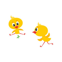 vector cartoon cute baby chicken characters set. Yellow small funny chicks running and playing with butterfly. Flat bird animal, isolated illustration on a white background.