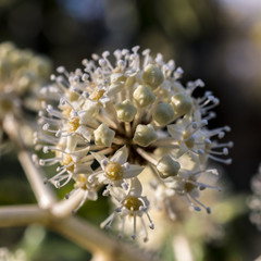Macro photography of small autumn flowers