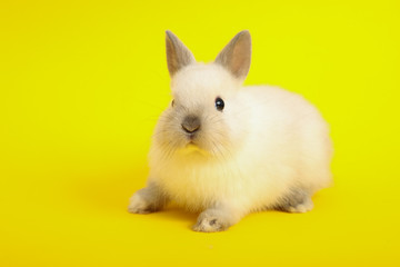 Rabbit on the color background
