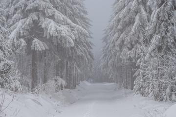 Winterlandschaft inmitten des Nebels