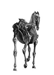 Horse Anatomy 02