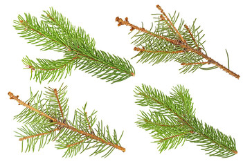 Fir branches isolated on a white background. Set of fir branches.