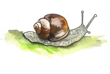 This is water colour painting of slowly snail. Its is picture suite into the child books.