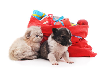 Kitten and puppy is near the Christmas bag with gifts.