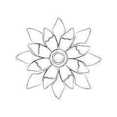 beauty flower floral natural bloom petal vector illustration