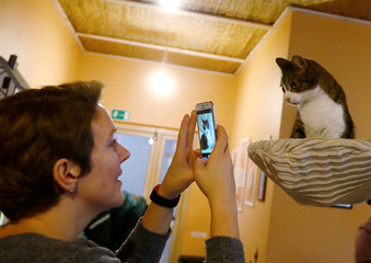 A woman takes a picture of a cat in a cat cafe in Vilnius