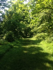 A Green Trail