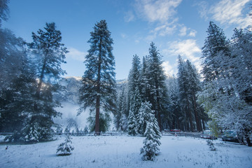Snowy Yosemite Valley Forest, Yosemite National Park, California, Near Campground in April