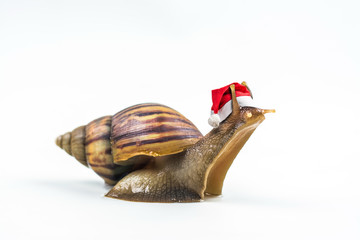 Christmas hat with snails on white background