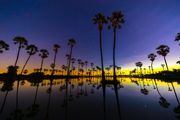 Silhouette of Twin Sugar Palm Tree on Night Sky with Stars before Sunrise. Reflection on the water. Pathum Thani Province, Thailand.