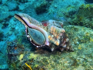 Shell of mollusc