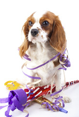 Animal dog pet puppy celebrate new year's eve. Cute king charles spaniel dog in studio. Puppy with trumpet sylvester illustration. Happy new year. Cavalier king charles spaniel cute photos. Cute.