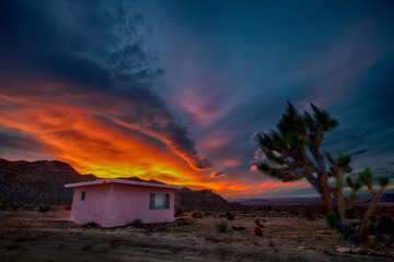 Pink Homestead Cabin and Joshua Tree