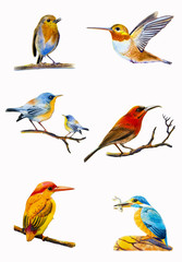 Set watercolor painting colorful of bird.