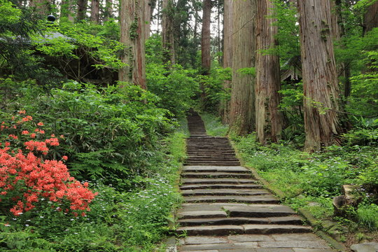 羽黒山杉並木 Mt.Haguro row of cedars / Haguromachi, Turuoka, Yamagata, Japan