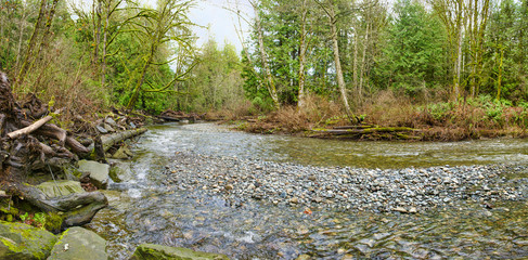 Panoramic view of Holland Creek trail in Ladysmith, Vancouver Island, BC, Canada