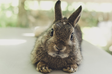 a little baby rabbit lying on the chair, relaxation concept