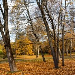 Norwegen, Norway, Oslo, Bygdøy, Herbst