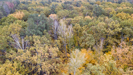 Aerial view of the forest with trees covered with yellow foliag