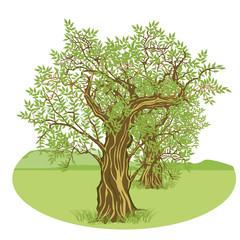 Olivenbäume in der Landschaft