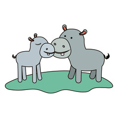 hippopotamus couple over grass in colorful silhouette on white background vector illustration