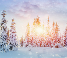 Mysterious winter landscape majestic mountains in winter. Magical winter snow covered tree. Photo greeting card. Bokeh light effect, soft filter. Carpathian. Ukraine.
