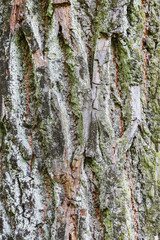 the bark of a large tree as a background