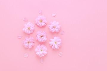 flat lay pink background with sakura fresh flowers