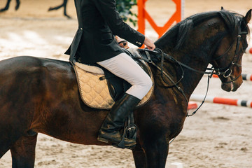 Horse jumping contest. The Equestrian Sports. Horseman sitting in saddle