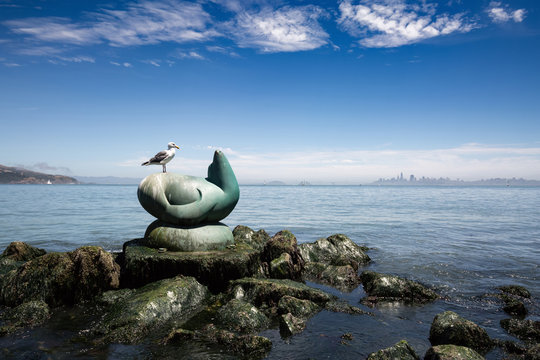 The Seagull and the sculpture of the seal in the background of the waterfront in San Francisco in California